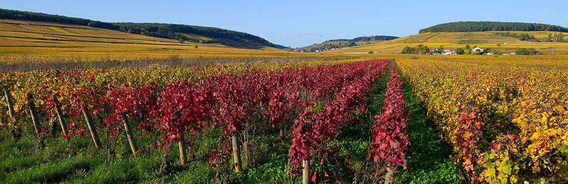 Vignoble Bourgogne Lafon